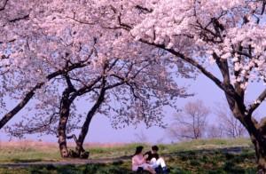 桜カップル